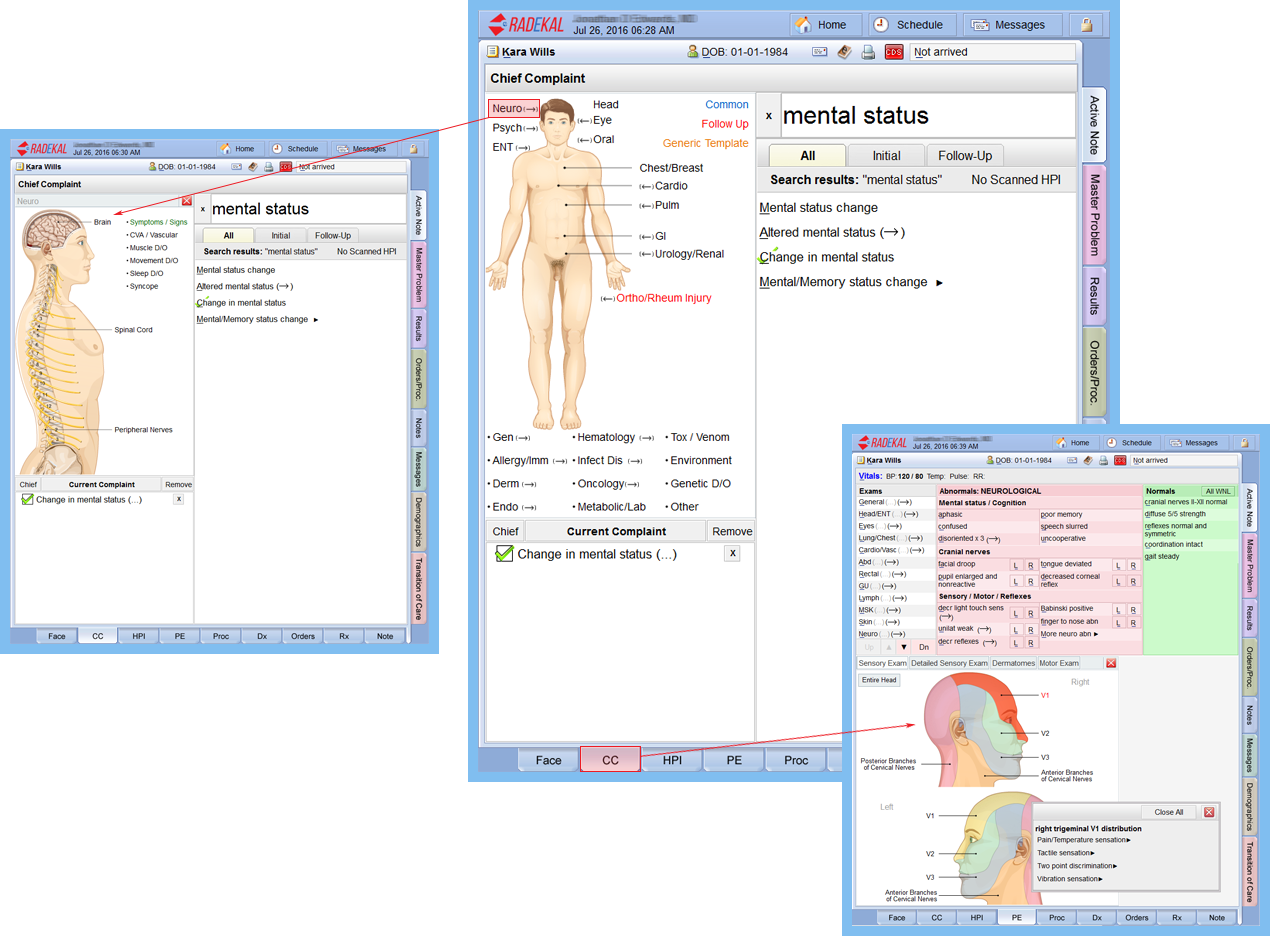 Radekal Productivity Tool Demo - Dynamic anatomical drawings