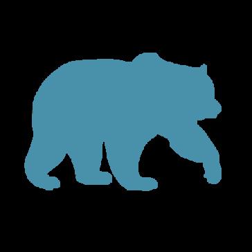 Blue Bear Creative LLC