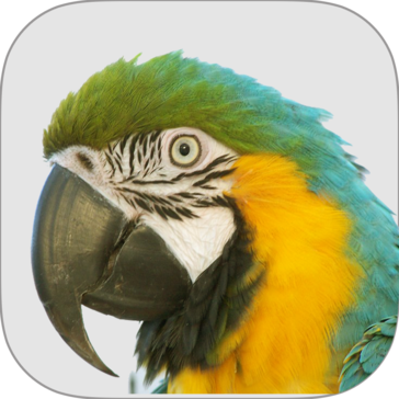 Macaw Agency Management System